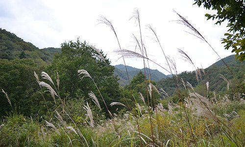 今なら見られる「畑アート」 かやぼっち 土呂部地区