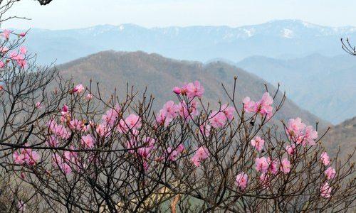 5月に入り、栗山の「復興記事」が続けて紹介されています。