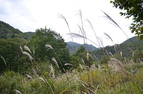 nikko-kayabocchi_04