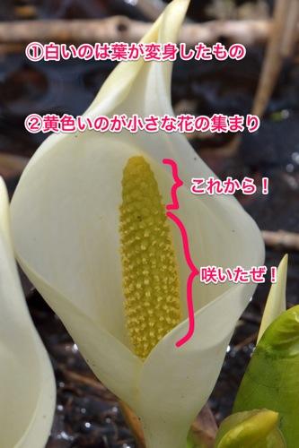 140422 d mizubasho2014 08