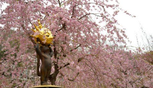 秘境・栗山はGWに満開。3つの春(ウメ・サクラ・ヤシオ)を紹介