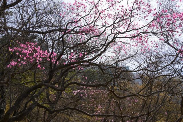 Gassan yashio2015 04