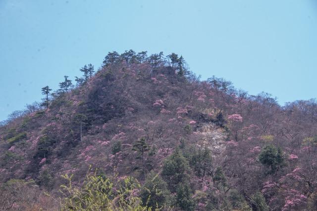 【日光・月山 2017春】ヤシオツツジの群生は毎年GWあたりがピーク。日光連山と栗山ダムのW眺望も