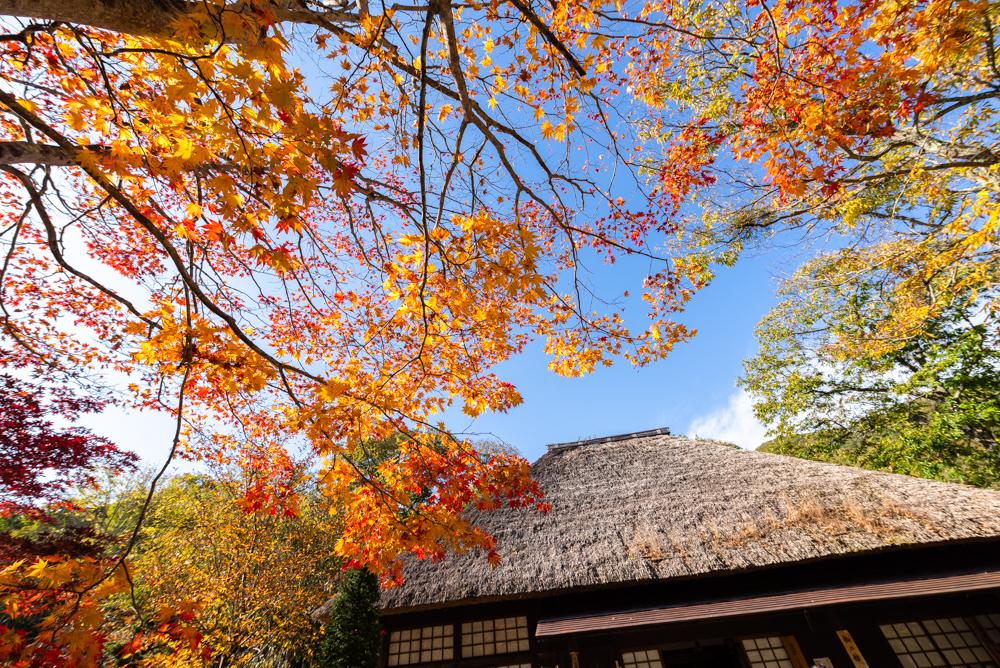 平家の里 の紅葉